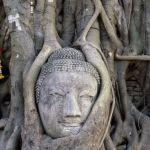 buddha-face-wat-mahathat-ayutthaya-thailand_19567