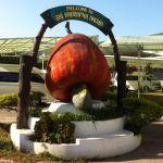 cashew-nut-factory-phuket