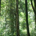 mangroves_rainforest_14