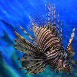 siam-ocean-world-aquarium