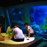 siam-ocean-world-bangkok-1