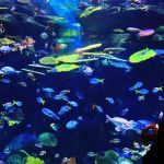 siam-ocean-world-bangkok
