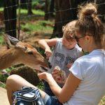 feeding_deer_at_paradise_park_farm