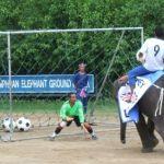 elephant-football