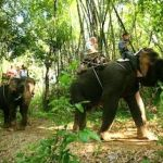 river_kwai_jungle_rafts_resort_elephant_ride48