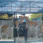samui-attractions-samui-aquarium-and-tiger-zoo