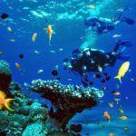 island-info-snorkeling-koh-samui-121