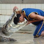 crocodile-farm2