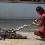 crocodile-farm3