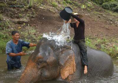 Denní péče o slony na řece Kwai