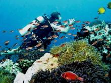 Potápění na Koh Bon, Koh Tachai & Premchai wreck