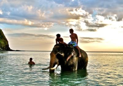 Plavání se slony