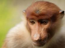 Opičí škola
