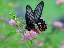Panee Butterfly Farm