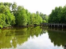 Salak Kok Mangrove Nature Trail
