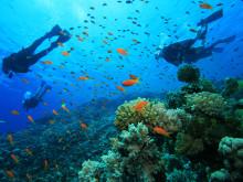 Korálový ostrov a potápění