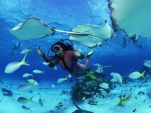 Top oblasti pro potápění na Koh Tao