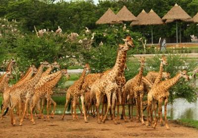 Safari World (Zoo, Marine Park, Show) včetně oběda