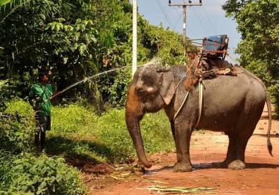 1 hod. jízdy na slonech